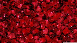 Full Rose Petals Photo