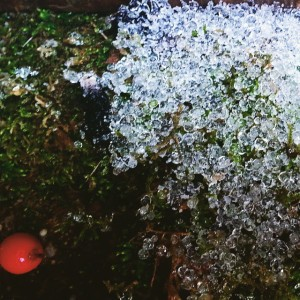 Ice crystal on the ground next to a holly berry