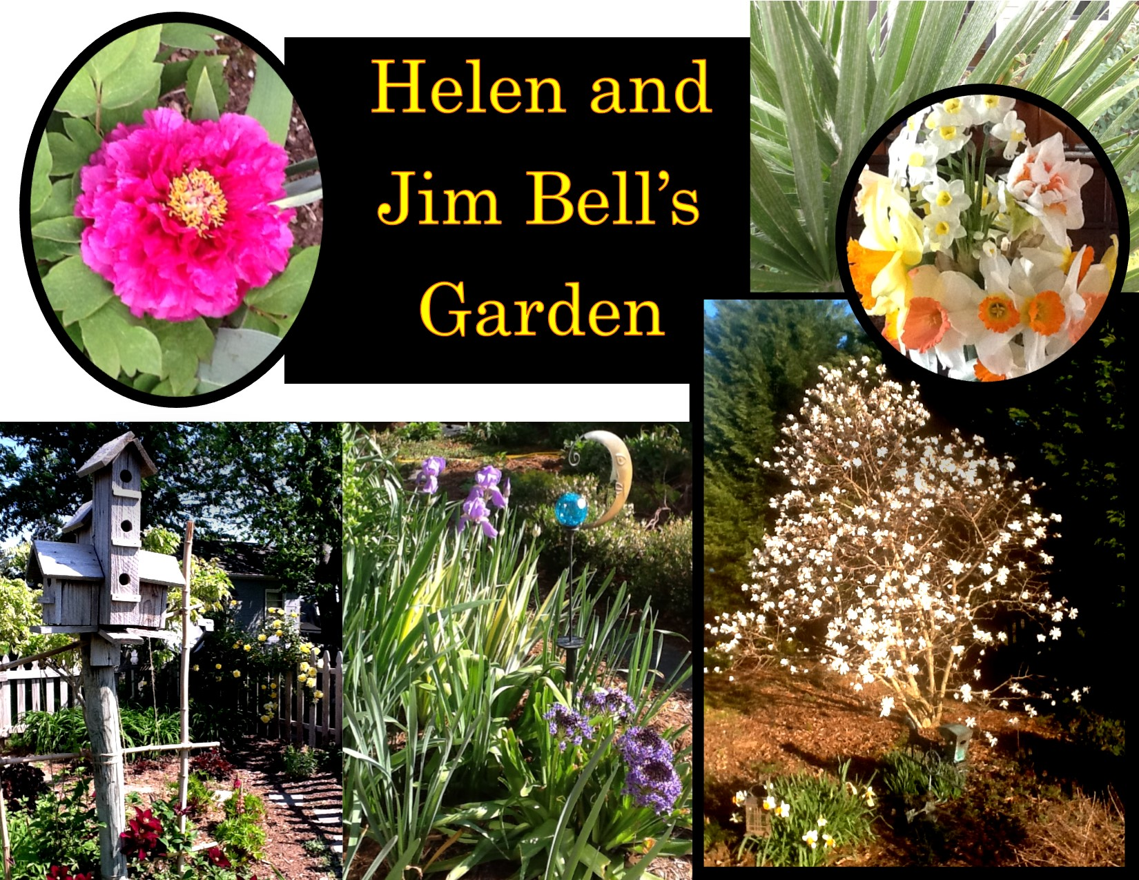 Garden Photos- Helen and Jim Bell