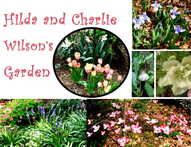 Garden Photos- Hilda and Charlie Wilson