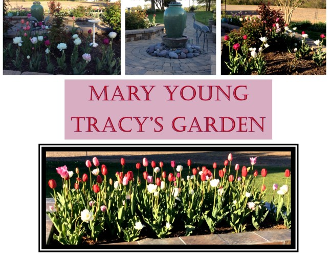 Garden Photos- Mary Young Tracy